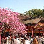 【太宰府天満宮】福岡空港からのアクセス!坂本八幡宮へはバスが便利!