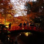 京都の紅葉はライトアップがおすすめ!行く価値あり!