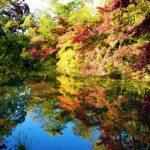 【週記】京都の紅葉へ!ハーブライフ楽しい♡ 2020/11/10-11/15