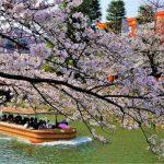 京都の桜巡り2021!今見頃です