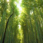 【京都】自然のパワースポット!神社以外のおすすめは嵐山!竹林と川は癒し!