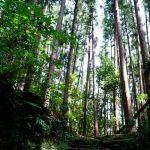 巡礼好き!熊野古道を歩くのは楽しい!新月の熊野で何かあった???