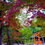 【神社・縁結び】京都の上賀茂神社!女子も男子もパートナー求めてる?ソウルメイト探してる?