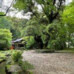 免疫力アップに森林浴!上賀茂神社に行ったら木の精霊から話しかけられる⁈