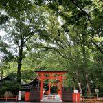 新緑の下鴨神社と糺の森!森林浴で免疫力アップ!アロマでも森のパワーは効果あり⁈